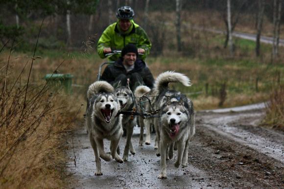 bild på ett hundspanns ekipage